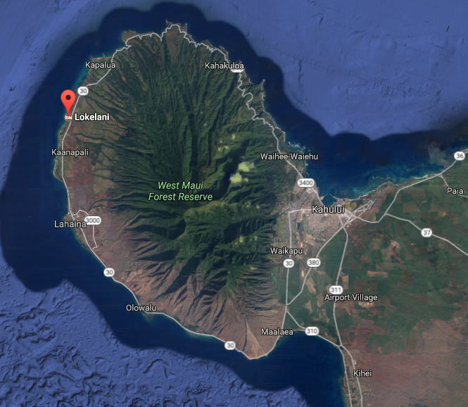 MauiFewo.com - Apartments auf Maui - Ortskundige Beratung auf ...